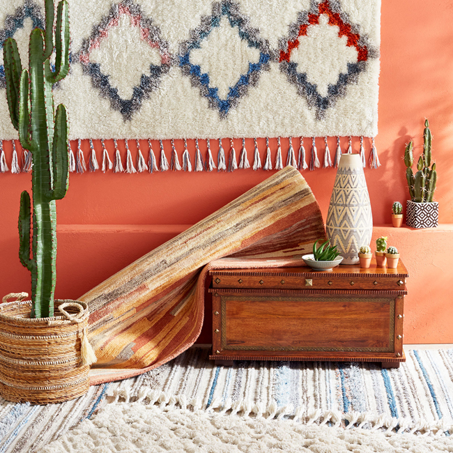 tall cactus plant and southwest decor