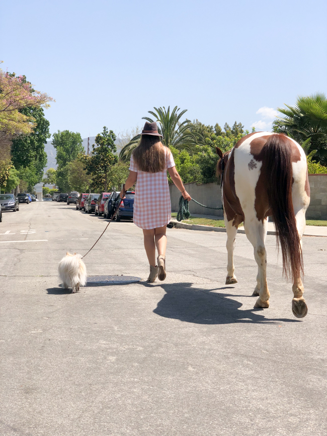 Walking a horse down the street in a Los Angeles neighborhood